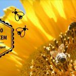 Razvojna agencija Sora / fb cover za Medeno