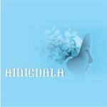 logotip Amigdala